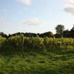 De Wijnmakers Wijngaard Bi'j de Regge